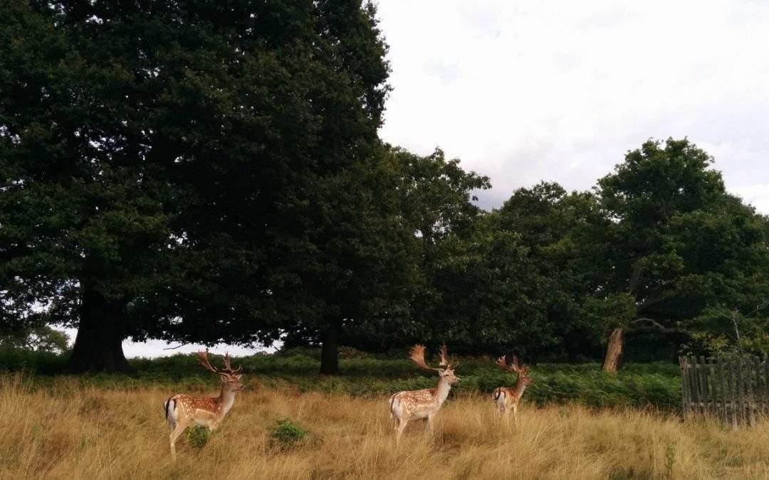 Outdoor fun at Richmond Park: a royal park
