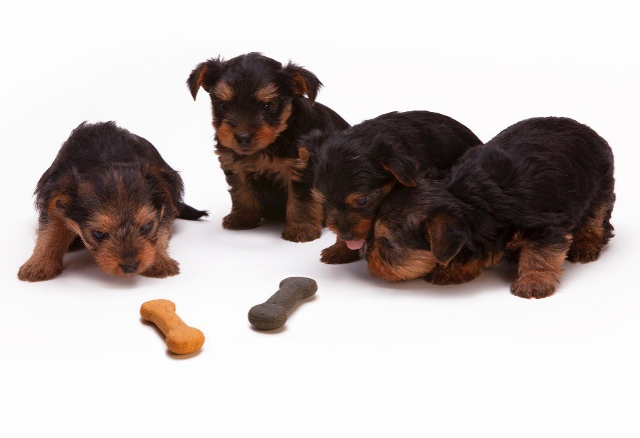 Guest Post: 6 Worst Dog Breeds for First Time Owners